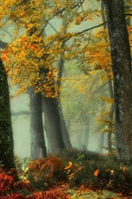 Preview iPhone wallpaper Beautiful autumn, forest, trees, fog, dawn