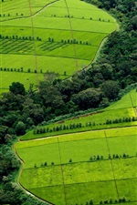 Preview iPhone wallpaper Beautiful green fields top view