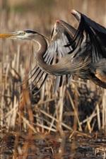 Preview iPhone wallpaper Bird take off, flight, grass, wetlands