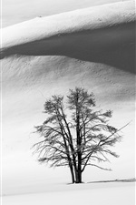 Preview iPhone wallpaper Black and white, snow, winter, tree