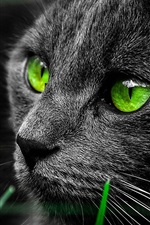 Preview iPhone wallpaper Black cat face, green color eyes