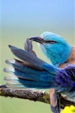 Azul, pena, pássaro, Dançar, asas