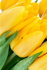 Bouquet yellow tulips