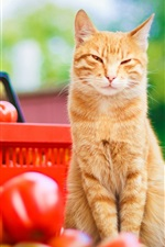 Preview iPhone wallpaper Cat look tomatoes