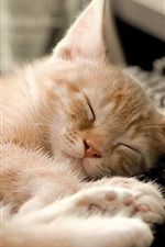 Preview iPhone wallpaper Cat sleeping at keyboard side