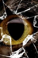Gato olho amarelo, vidro quebrado