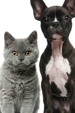 Preview iPhone wallpaper Cats and dogs, white and black