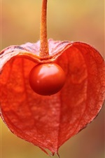 Preview iPhone wallpaper Chinese lantern tree, physalis plant fruit