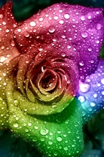 Preview iPhone wallpaper Colorful petals rose, dew