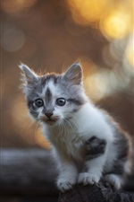 Preview iPhone wallpaper Cute furry kitten, fence, bokeh