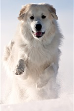 Preview iPhone wallpaper Dog running in thick snow, winter
