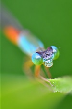 Preview iPhone wallpaper Dragonfly macro photography, insect, leaves, dew