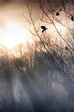 Preview iPhone wallpaper Forest morning, trees, fog, birds, sunrise