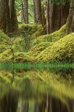 Preview iPhone wallpaper Forest, trees, pond, grass, moss, green