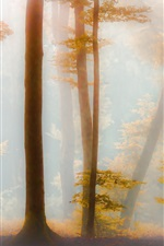 Preview iPhone wallpaper Forest, trees, yellow leaves, fog, morning, autumn