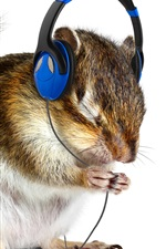Preview iPhone wallpaper Funny animal, squirrel listen music, headphones