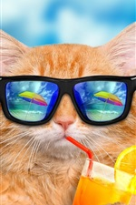 Funny animals, cat and sunglasses, eat drinks