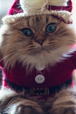 Preview iPhone wallpaper Funny kitten, sweater, furry