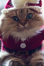 Gatinho engraçado, camisola, peludo