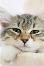 미리보기 iPhone 배경 화면 모피 고양이 얼굴, 수염