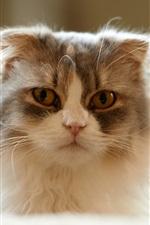 Furry kitten, home pet