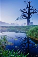 Preview iPhone wallpaper Grass, tree, river, fog, dawn, Old Oak, Poland