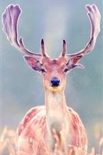 Preview iPhone wallpaper Grassland, deer, horns
