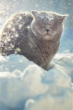 Preview iPhone wallpaper Gray cat in the thick snow winter