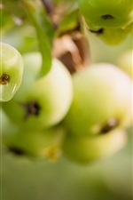 Preview iPhone wallpaper Green apples, tree, dew, summer