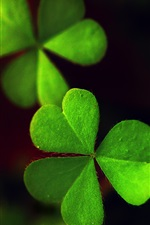Preview iPhone wallpaper Green clover, night, light