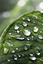 Preview iPhone wallpaper Green leaf macro photography, water droplets