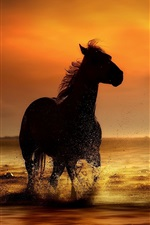 Preview iPhone wallpaper Horse at sunset coast