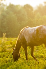 Preview iPhone wallpaper Horse eating grass