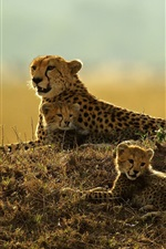 Preview iPhone wallpaper Leopard rest, mother and cubs