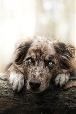 Preview iPhone wallpaper Lonely dog in forest, face, eyes