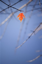 Preview iPhone wallpaper Lonely maple leaf, twigs, autumn