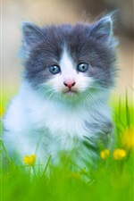 Preview iPhone wallpaper Lovely furry kitten in the grass