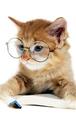 Lovely kitten reading a book, glasses