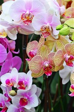 Many kinds phalaenopsis, colorful flowers