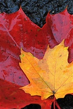 Preview iPhone wallpaper Maple leaves, red and yellow, autumn, wet