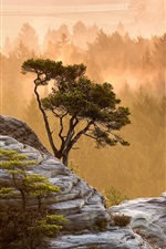 Preview iPhone wallpaper Morning nature landscape, trees, fog, stones, sun rays