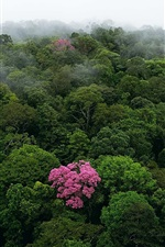 Preview iPhone wallpaper Morning top view the forest, fog, tree flowers