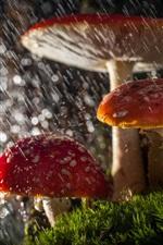 Preview iPhone wallpaper Mushrooms in rain