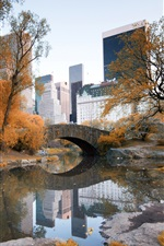 New York, Central Park, autumn, trees, water, skyscrapers