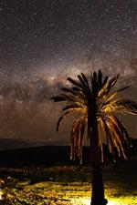 Night, tree, lights, stars, Palma
