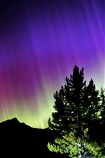 Northern lights, night, mountains, trees, stars