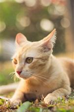 Preview iPhone wallpaper Orange cat rest