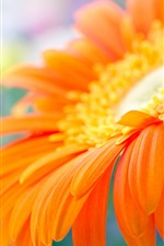 Preview iPhone wallpaper Orange gerbera flower in water