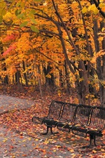 Park, bench, trees, path, red leaves, autumn