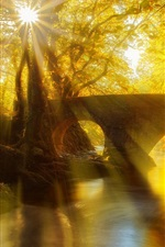 Preview iPhone wallpaper Park, bridge, river, trees, leaves, sun rays